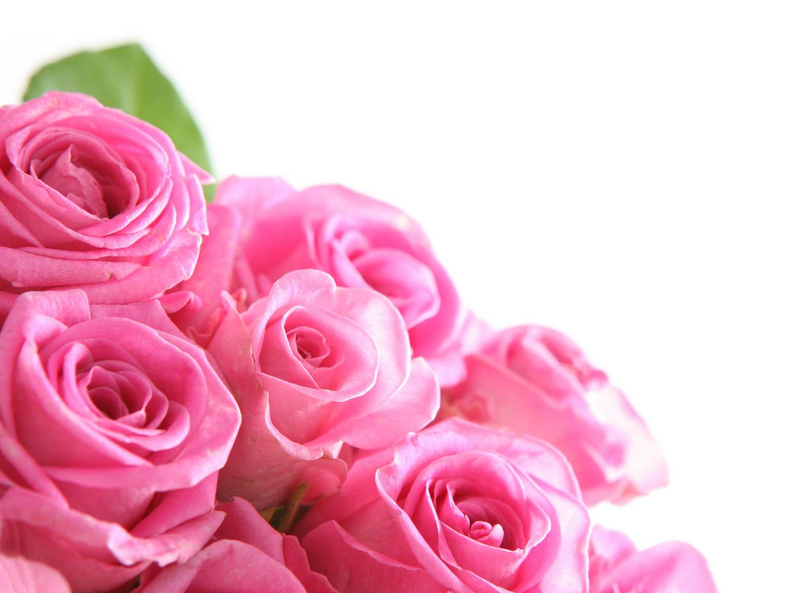 Bunga Mawar Pink