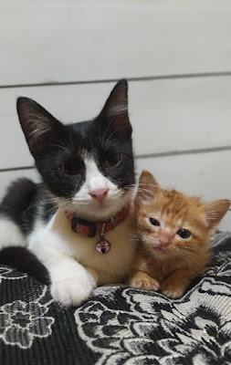 Bayi kucing