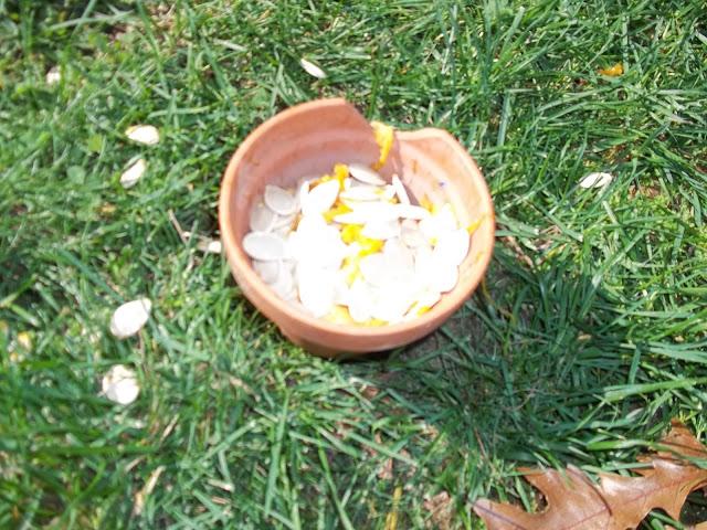 image of pumpkin seeds