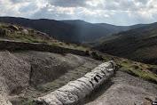 Ilmuwan Yunani Temukan Fosil Pohon Berumur 20 Juta Tahun