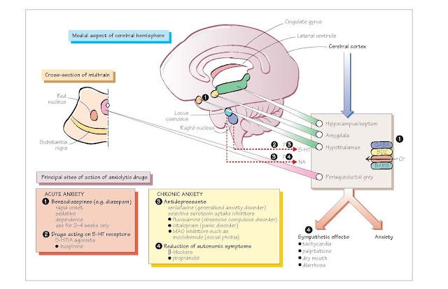 Neurochemical Disorders III: Anxiety, Anxiety disorders,