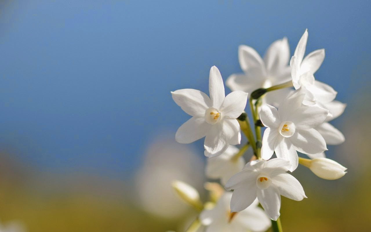 Imagenes de Amor, Flores Blancas, parte 1