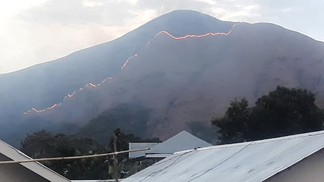 Si jago merah kembali mengamuk di Bukit Anak Dara Sembalun