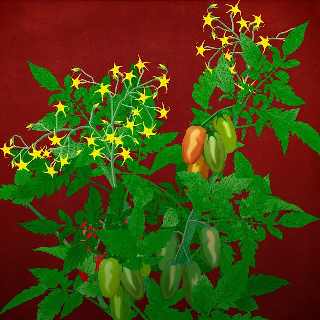 Tomatera, tomates , flor