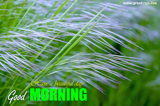 Good morning wishes images messages green bush