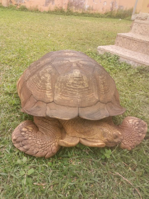 344-year-old Ogbomoso palace tortoise, Alagba is dead