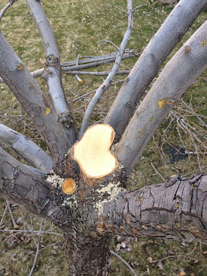The Leader has Been Removed From this Pear Tree
