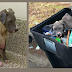 After Beating & Using Her To Have Puppies, They Dumped Her In A Garbage Bin