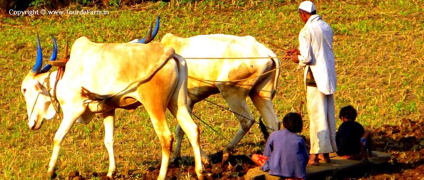 Best Indian Countryside Photographs | Rural Maharashtra Photography