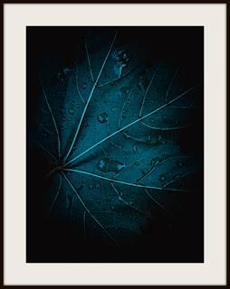 plakat, plakat z liściem, plakat z liściem w kroplach, plakat darkmood, plakat z liśćmi, plakat w kroplach deszczu, plakat roślinny, plakat A3
