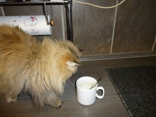 Melitta Kaffee des Jahres 2018