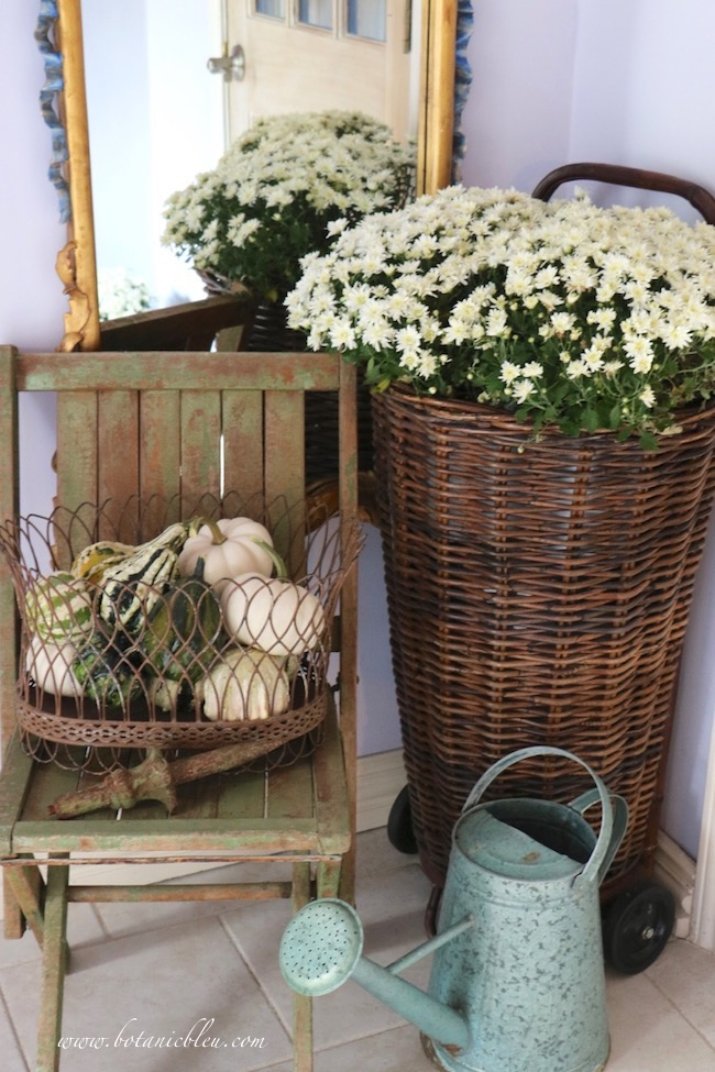 French Country rustic fall entry with white mums and small green gourds save space by placing a French wire basket on a chippy chair instead of the floor