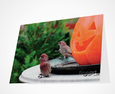 "This is a picture of a Halloween card which I designed. It features a Jack-O-Lantern sitting atop a table in my garden. This Jack is ""smiling"" at a male house finch. The card is available via Fine Art America. https://fineartamerica.com/featured/house-finches-trick-or-treating-patricia-youngquist.html"