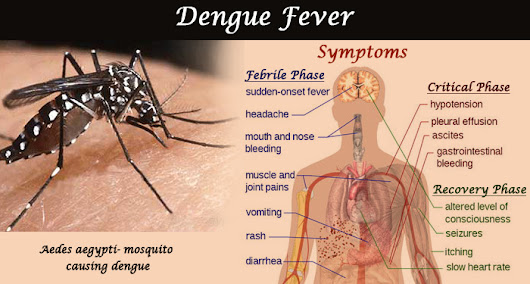 8 Surprising Home Remedies For Dengue Fever