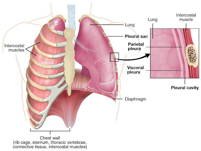 الأعراض المبكرة لاسترواح الصدر الرئوي  الاختناق وعدم الراحة حول الكتفين