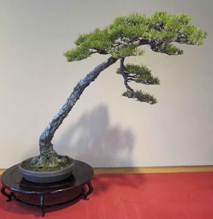 Bonsai, Belleza de la Naturaleza