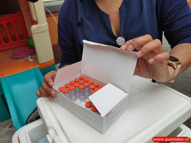 Puyehue Vacunas