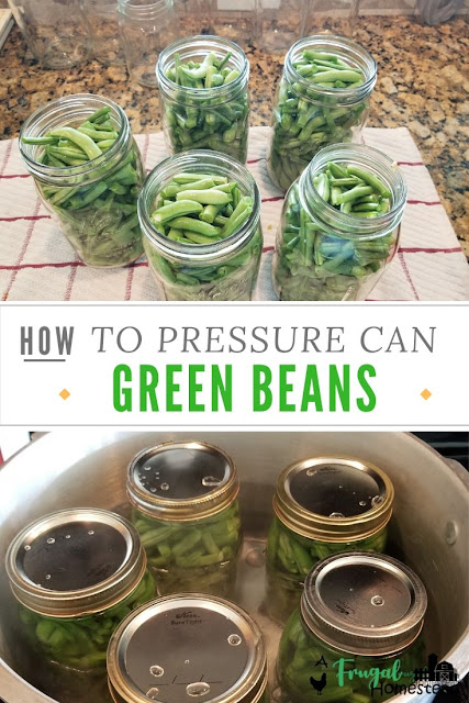 Learn how to can green beans with a pressure cooker and this simple tutorial and recipe.
