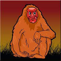 Bald Uakari Monkey Escape…