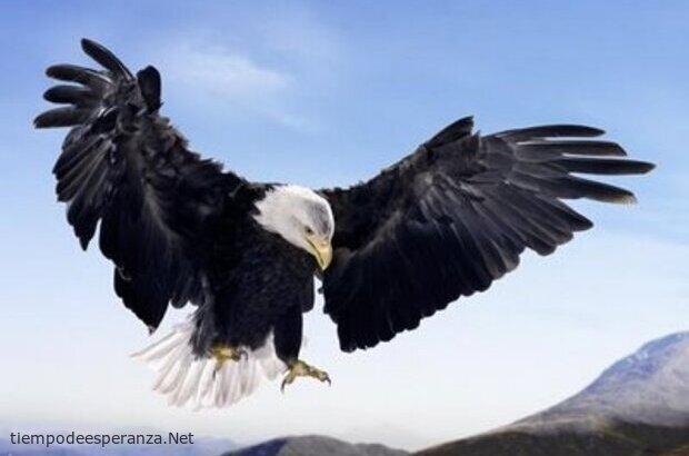 Águila levantando vuelo - Cumple tus sueños