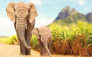 हाथी के बारे में जानकारी ▷ some facts about elephant in hindi