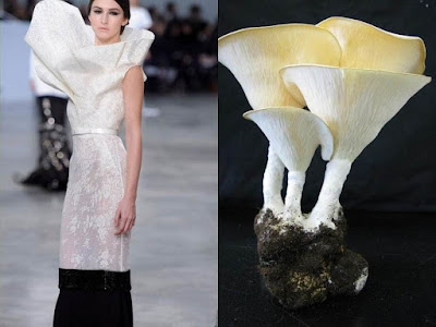 Modern Art With Mushrooms
