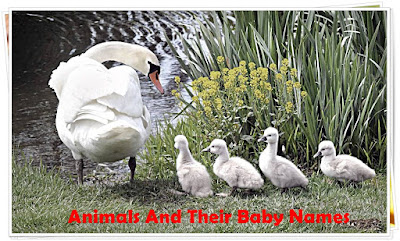 Animals And Their Babies Names