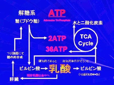 Road to Pharmacist General☆彡