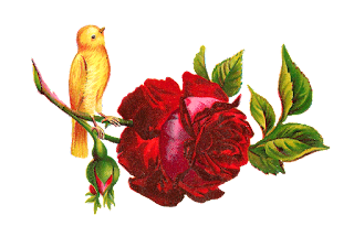 red rose clip art yellow bird