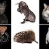 Η ΤΕΛΕΙΑ ΑΤΕΛΕΙΑ! Τέλεια ζωάκια φωτογραφίζονται με τις ατέλειές τους