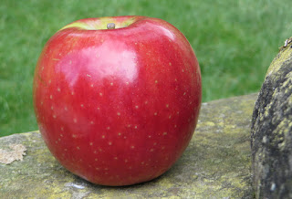 Cripps Red apple