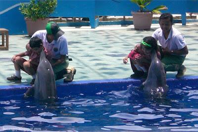 Tempat Wisata Pantai Sigandu dengan Batang Dolphin Centre di Batang Tempat Wisata Pantai Sigandu dengan Batang Dolphins Center di Batang