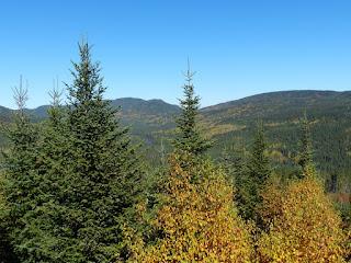 la Forêt Montmorency