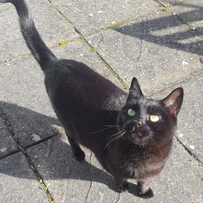 black cat on paving