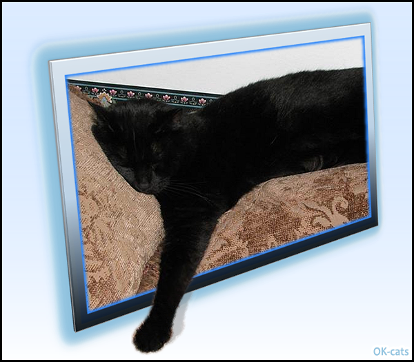 photoshop-cat-sleeping-with-paw-out-of-bound