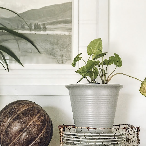 How to Give Plant Pots a Stone Look