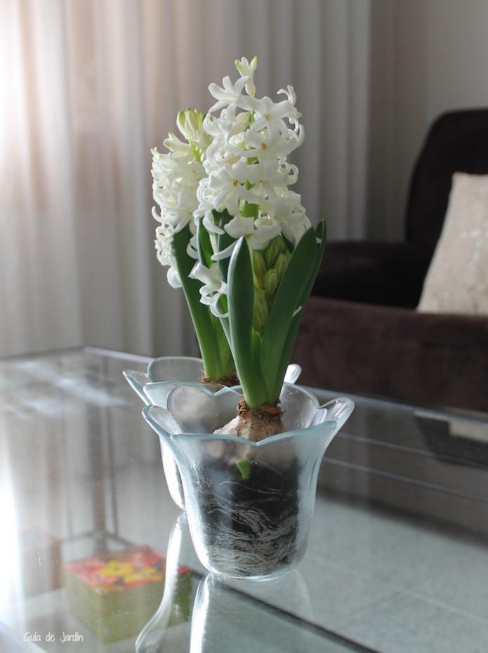 jacintos blancos en mesa de salón