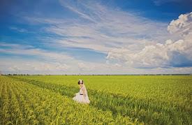 paddy field blue sky