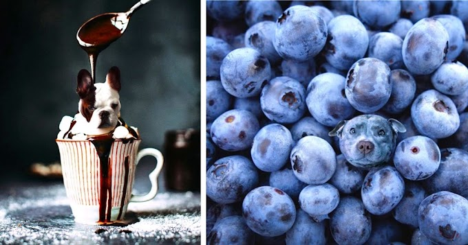 It's Hilarious That Someone Photoshopped Dog Faces Into Foods (17 Pics)