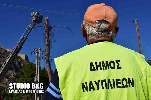 Επικίνδυνο για πτώση δέντρο έκοψαν στο κέντρο του Ναυπλίου (βίντεο)