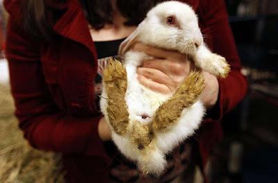 rabbit abuse