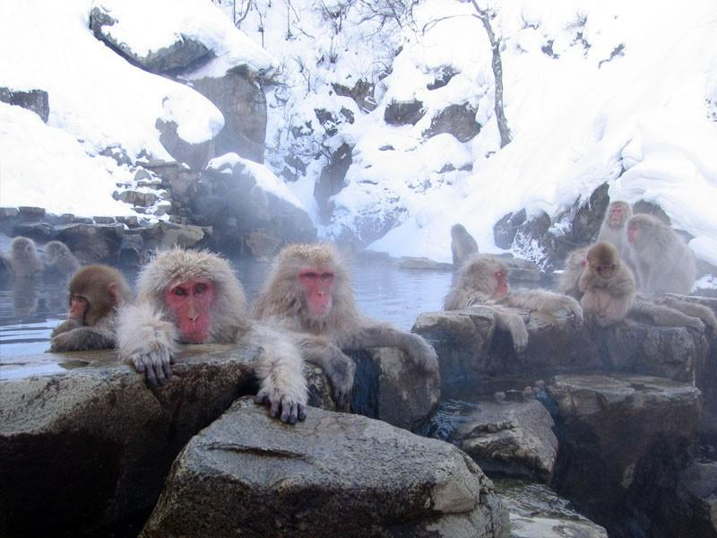 Hot Springs in the World