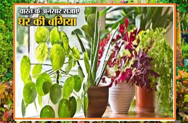 वास्तु की खास बातें: घर में पौधा लगाते समय इन बातों का रखेंगे खास ध्यान, तभी आएगी धन, समृद्धि के साथ सुख-शांति