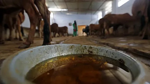 Yogi Govt plans to brand domes and dung To increase sales employment,www.thekeralatimes.com