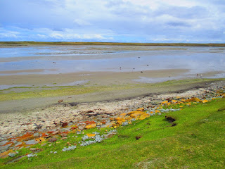 East Falkland - Falkland Islands