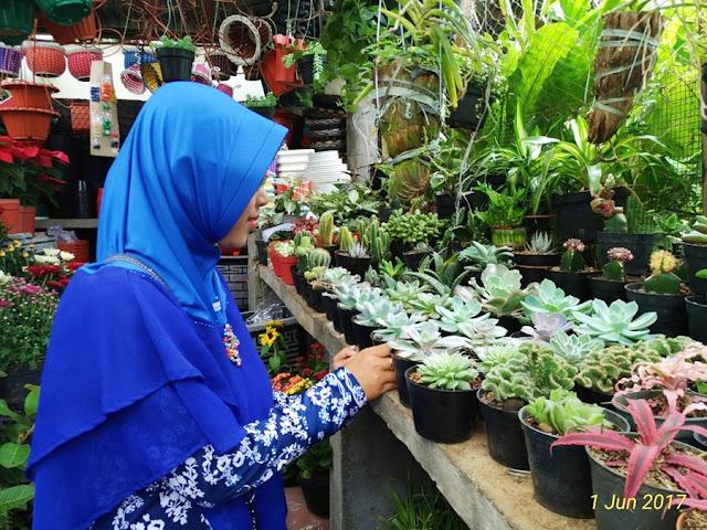 tanaman hias mini sukulen