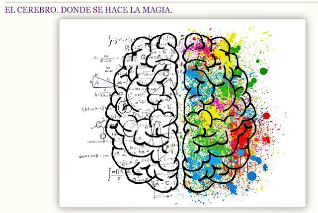 El cerebro. Donde nace la magia