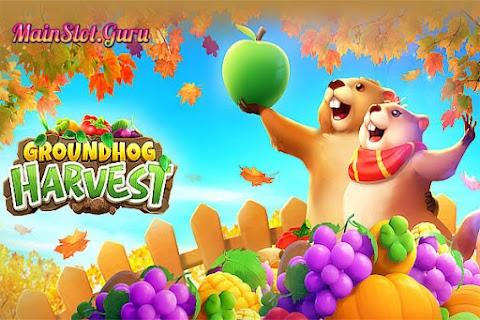 Main Gratis Slot Groundhog Harvest (PG Soft)   96.71% RTP