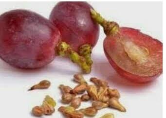 Manfaat biji buah anggur
