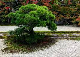 What Is A Zen Garden? 15 Zen Garden Ideas